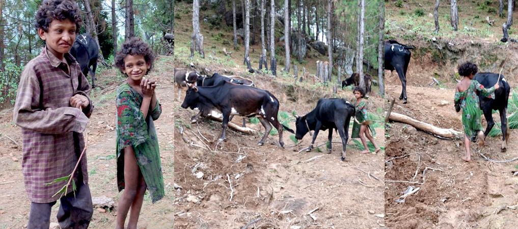 गरिबीको सजीव तस्बिर, घनघस्याको चिसो लेकमा नाङ्गा गोठाला